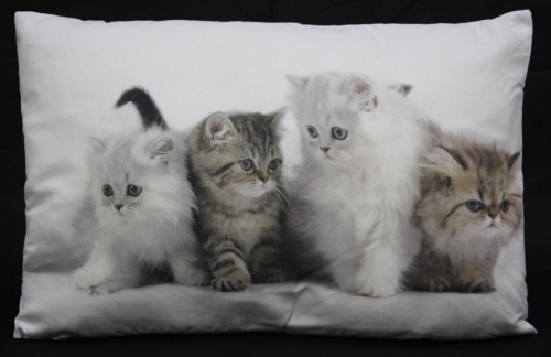4 Kittens Print Cushion 60X40Cm