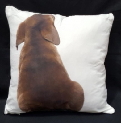 Chocolate Lab Puppy Print Cushion 45X45Cm
